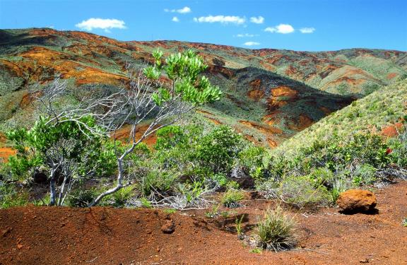A typical landscape from the South of New Caledonia. The red-orange color of the rocks comes from the soil which is rich in metal oxides.