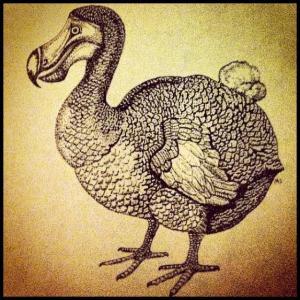 dodoinstagram