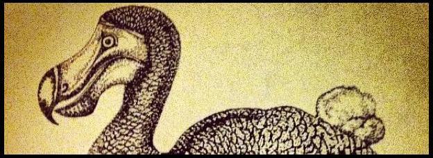 dodoinstagrambanner