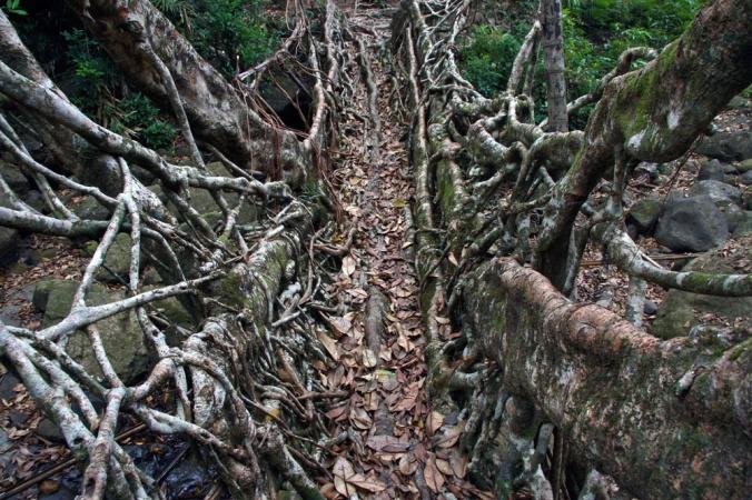 Fig tree bridge. Credit: Laurence Mitchell (https://eastofelveden.wordpress.com/2011/03/06/crossing-the-bridge/)