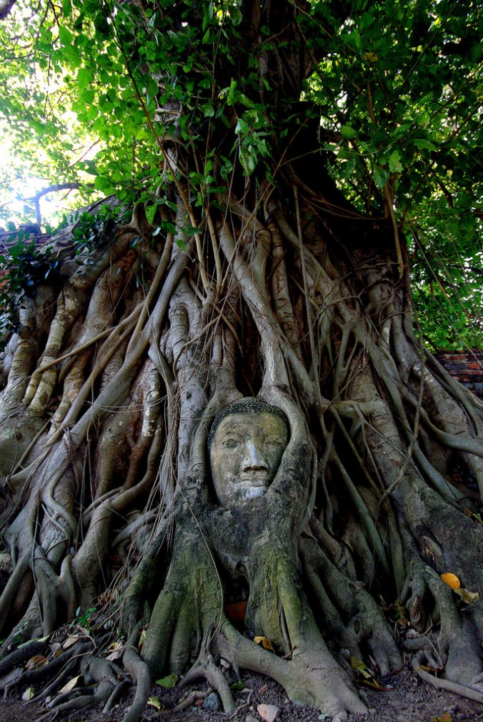 Buddha-head-strangler-fig-Ficus-roots-Thailand