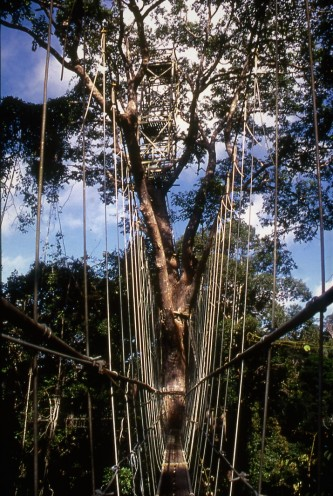 Canopy walkway. Lambir Hills National Park, Sarawak