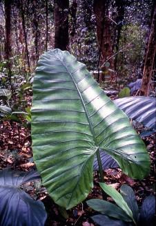 Lambir Hills National Park, Sarawak