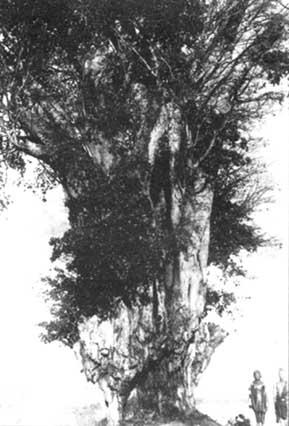 ConsolataMugumo