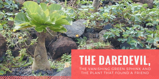 The daredevil, the vanishing green sphinx and the plant that found a friendde