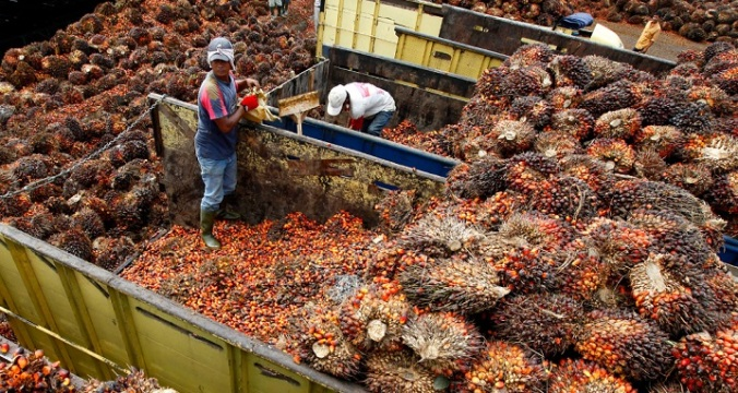 Oil-palm-fruit-gathered-for-processing-Indonesia